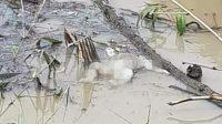 Mayat bayi mengapung di sungai