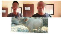 Pencurian hewan ternak warga