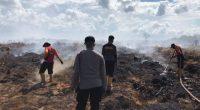 Kebakaran hutan dan lahan di Tanjung Jabung Timur