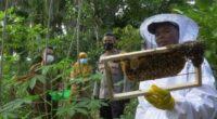 Petani lebah Madu Merangin